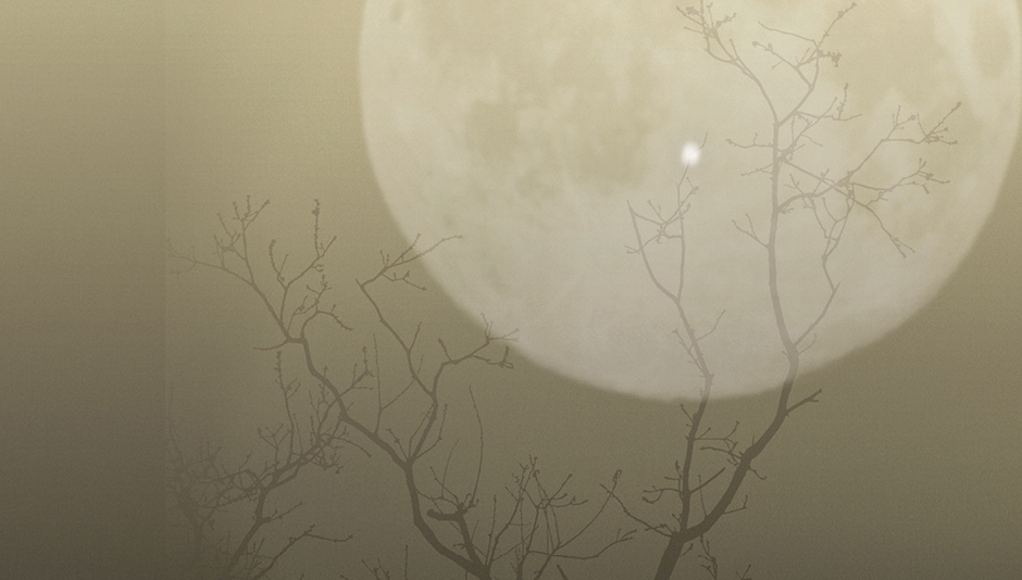 Image of the moon appearing behind a tree.